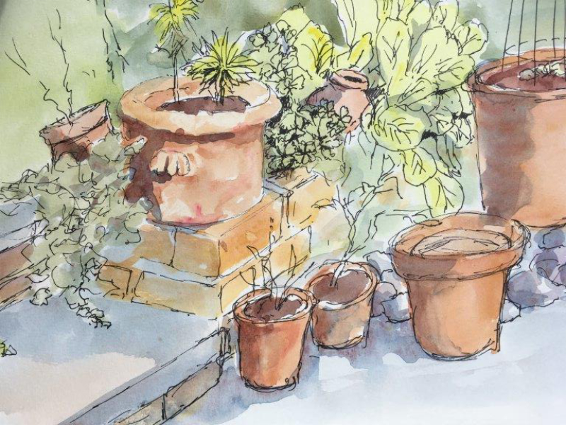 Pots in Sunlight, pen and wash