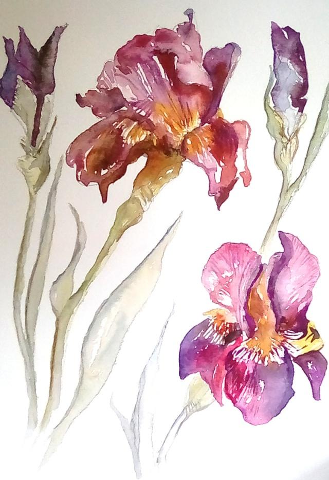 Trish Courquin, Irises